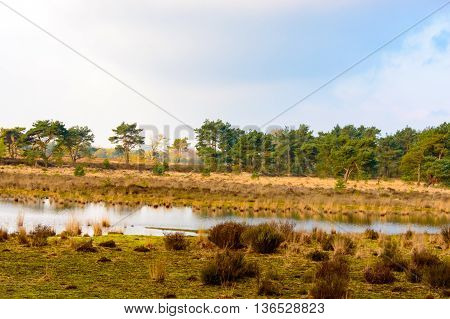 Tranquil rural lake in a scenic landscape with trees golden grassland and scattered scrub and the far bank reflected on the surface of the water