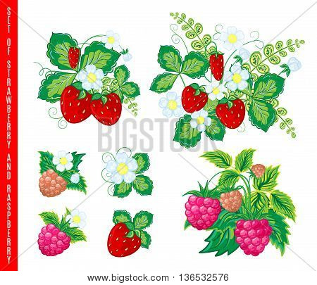 Natural organic berries set of raspberry strawberry colored sketch isolated vector illustration