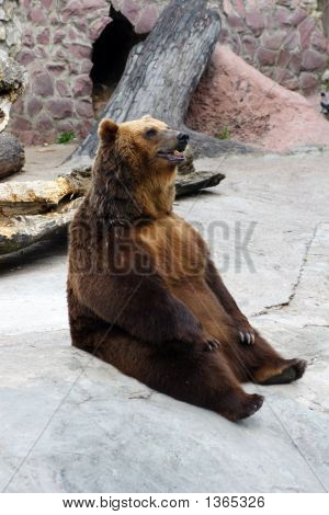 Animals, Brown Bear