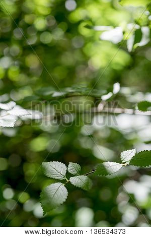 Green nature scenery with branch of plant leaves and colorful blur background on sunny day.