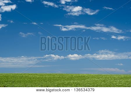 Green Field Under Blue Sky Landscape