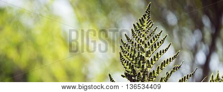 Green Forest Environment Leaf Background