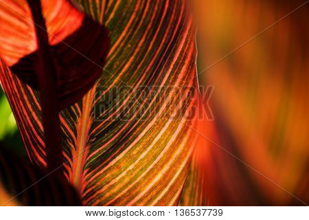 Colorful Plant Leaf Nature Background