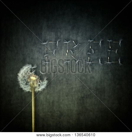 A lot of seeds escape from a dandelion flower arranged as word FREE on a concrete backround. Breaking free life journey concept