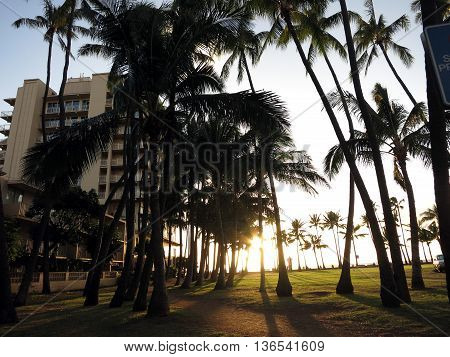 Sunset as it lowers towards the ocean shining through row of Coconut trees on Kaimana Beach on Oahu Hawaii.