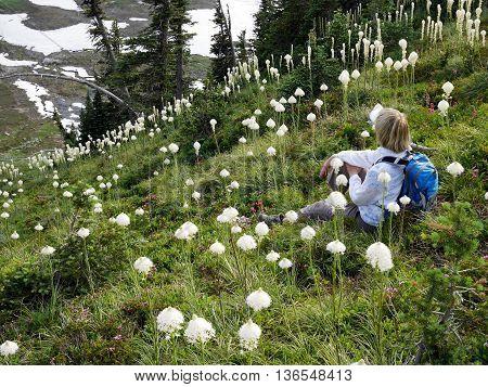Woman sitting among white flower. High Skyline trail on Mount Rainier National Park Seattle Washington USA.
