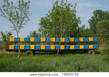 Beehives mounted on a trailer. Portable apiary. Apiary trailer.