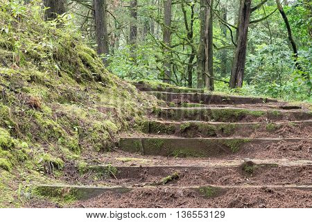 stairs in the forest with trees and moss