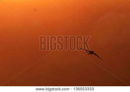 sand martin flying in fog, Bird with insect in its beak, a unique moment