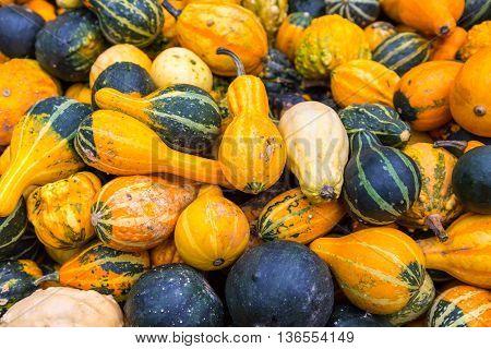 Pile of big colorful pumpkins, autumn harvest natural background