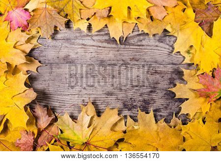 Autumn wooden natural background with maple yellow leaves and space for text
