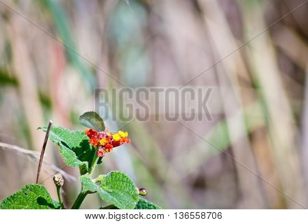 Small whit butterfly on small sunlit red and yellow flowers