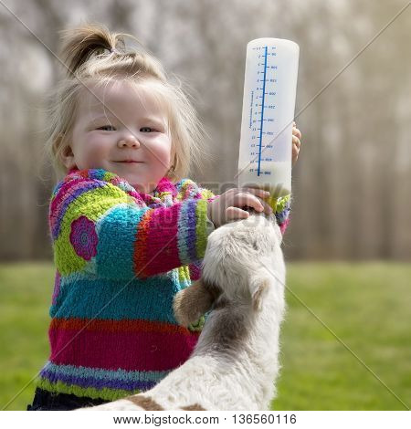 Cute, young girl, bottle feeding milk to orphaned Katahdin lamb.