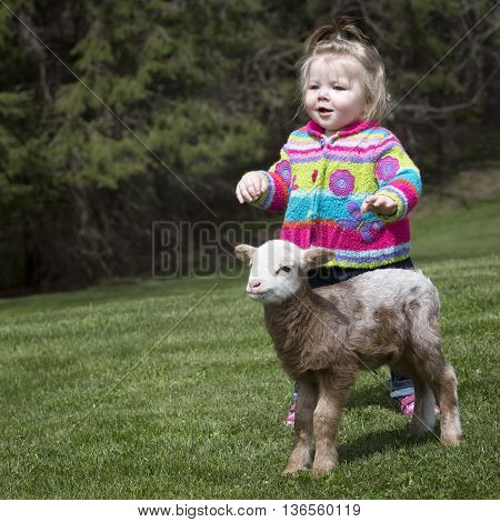 Cute, little girl with pet Katahdin lamb