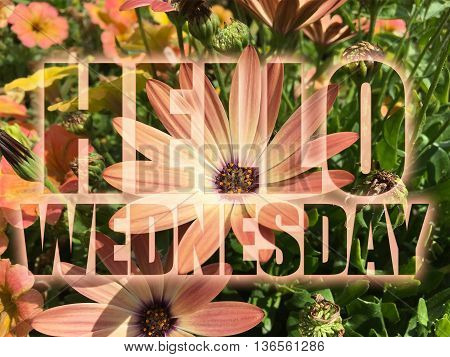 Hello Wednesday word on nature flowers background