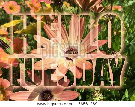 Hello Tuesday word on nature flowers background