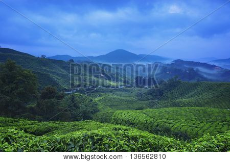 Viewpoint on the top of cameron highland tea valley and sunrise in Malaysia.