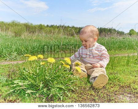 Beautiful happy little baby boy sitting on a green meadow with yellow flowers dandelions on the nature