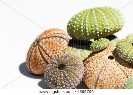 Colored Sea-Urchin'S Shells