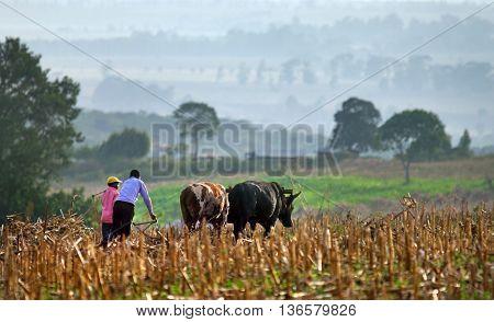 ELGON KENYA -JANUARY 04 : Farmers plows field on January 04 2013 near Mount Elgon National Park.