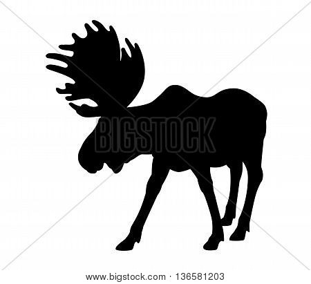 Beautiful silhouette of an adult moose with big antlers. Isolated on white.