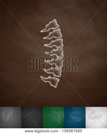 spine icon. Hand drawn vector illustration. Chalkboard Design