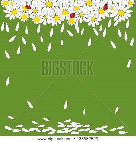 Daisies With Ladybirds On Green Background
