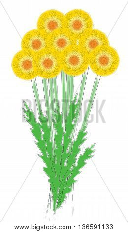 Flowers, dandelions, painted, delicate, yellow, fluffy, garden, flowerbed.