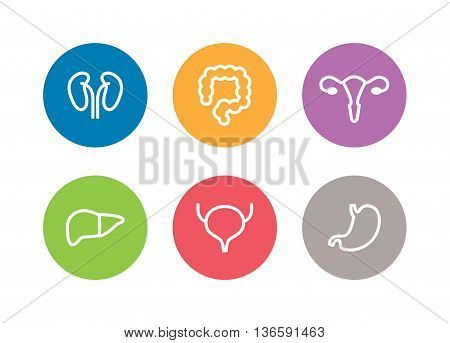 Vector human internal organs icons. Liver, kidneys, uterus, bladder, stomach and colon design