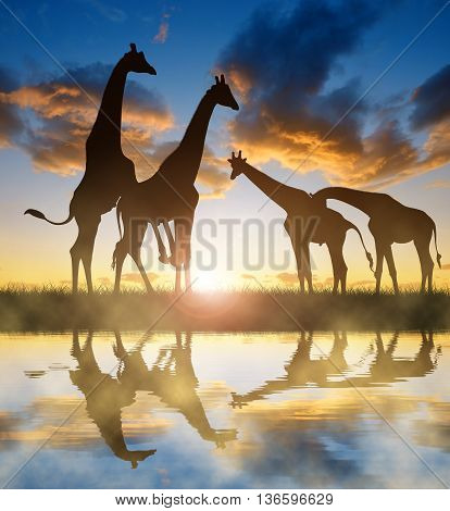 Herd of giraffes in the sunset sky.
