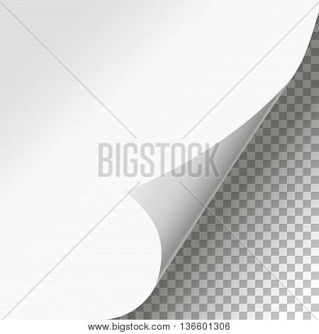 Curled Page Corner Isolated Background Stylish Design