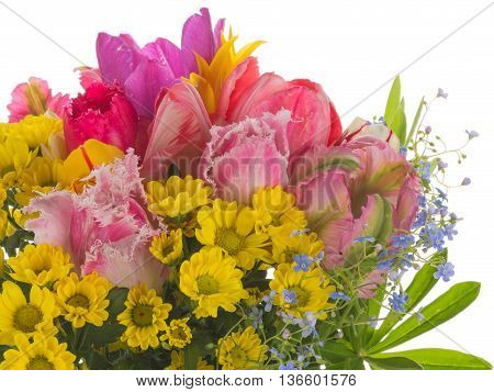 beautiful colorful bouquet of bright colorful fringed tulips forget-me-and yellow chrysanthemums on a white background isolated