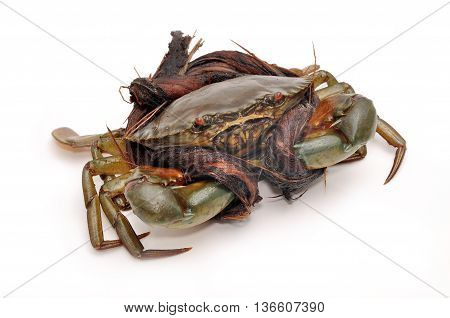 Crab from the Mekong delta on a white background