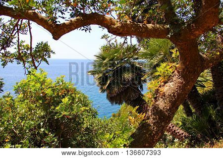 strongly curved deciduous tree with a strong trunk, against the blue sea, behind was peeking out from behind palm trees, lots of greenery around