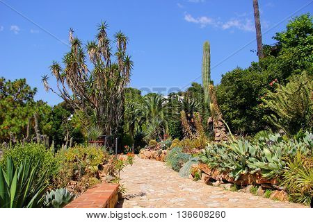 many different types, varieties of cacti, palm trees grow in the Park, the Botanical garden, the blue sky with clouds, lots of greenery