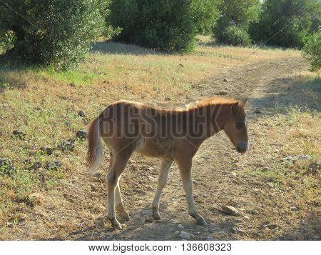 Newly Born Foal