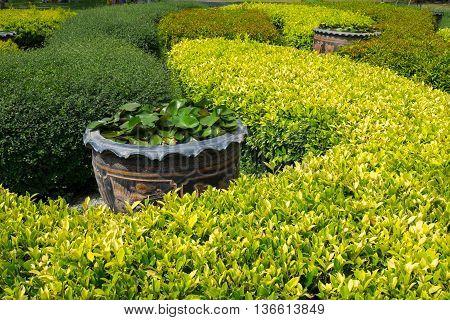 many kinds of plants and flowerpot in Jatujak park Bangkok Thailand