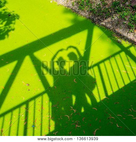 shadow of love on green duckweed floating in a canal