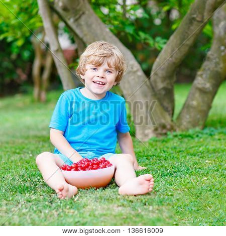 Little blond kid boy eating cherries in domestic garden on warm summer day, outdoors. Healthy snack for children in summer. Kids helping with gardening