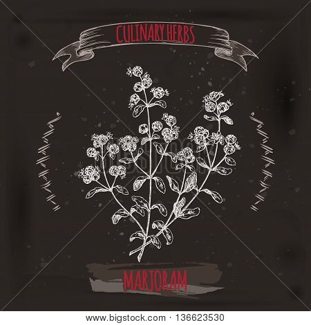 Origanum majorana aka Marjoram vector sketch placed on grunge black background. Culinary herbs collection. Great for cooking, medical, gardening design.