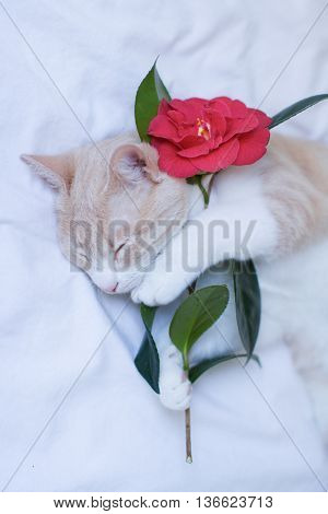 Young cat sleeping in a bed with a rose