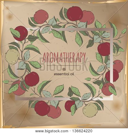 Vintage frame template with color apple fruit and leaves sketch placed on old paper background. Aromatherapy series. Great for traditional medicine, perfume design, cooking or gardening.