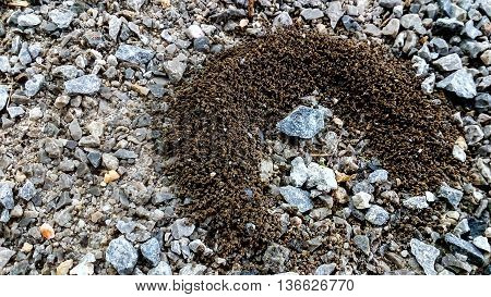 Ant Nests On Gravel Stones. Ant Nest Made Of Clay.