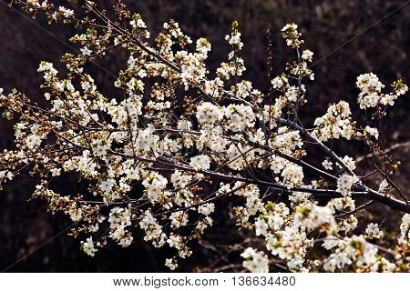 Decorative Branch With White Flowers