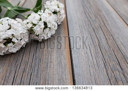 Phlox On A Wooden Background