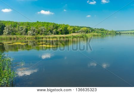 Simple tranquil landscape on a summer lake