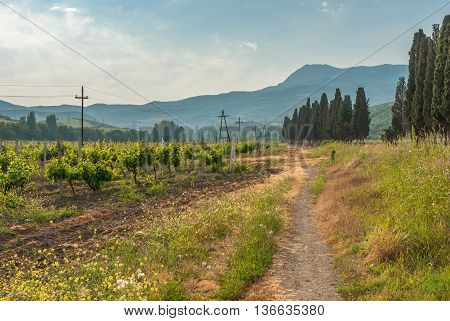Mountain landscape with vineyard near Alushta city on Crimean peninsula