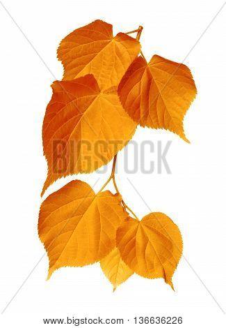 Autumn Sunlight Leafs
