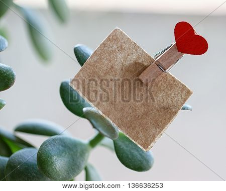 plant Crassula with an attached recording and a pin in the shape of heart
