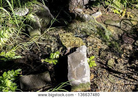 Small forest stream with stones a moss and a grass